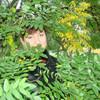 Татьяна, 49, г.Георгиевск